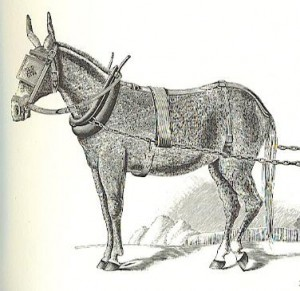 Mule plow harness