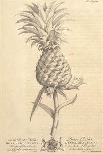 Image from Griffith Hughes, The Natural History of Barbados, 1750. Public domain image.
